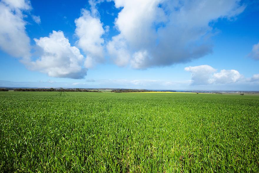 Crops Eyre Peninsula. South Australia.