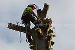 High Elms Tree Surgery 25th January 2011  Shenley