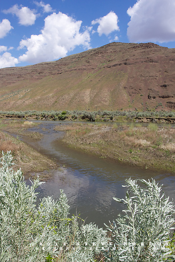 A side channel splits from the John Day River, Oregon.