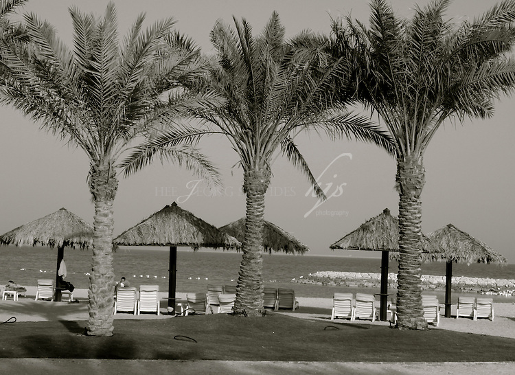 Palm trees along the beach at the Intercontinental Hotel, Doha, Qatar | Mar 10