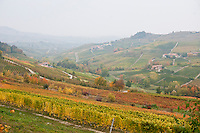 Tapestry of autumn colours in the vineyard district of Le Langhe, Piemonte, Italy
