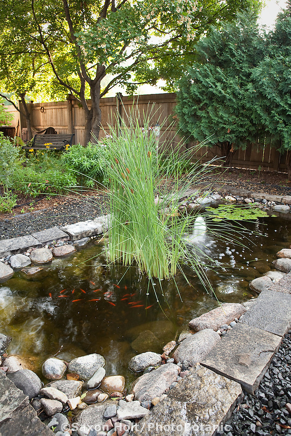 Rectangular pond with cattails (Typha latifolia) and gravel path in shady backyard habitat garden