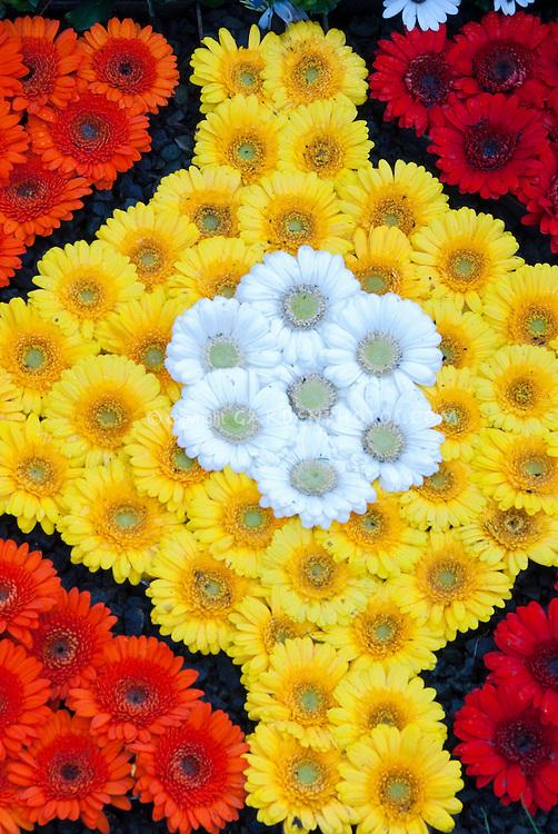 Gerbera Daisy Red Yellow and White