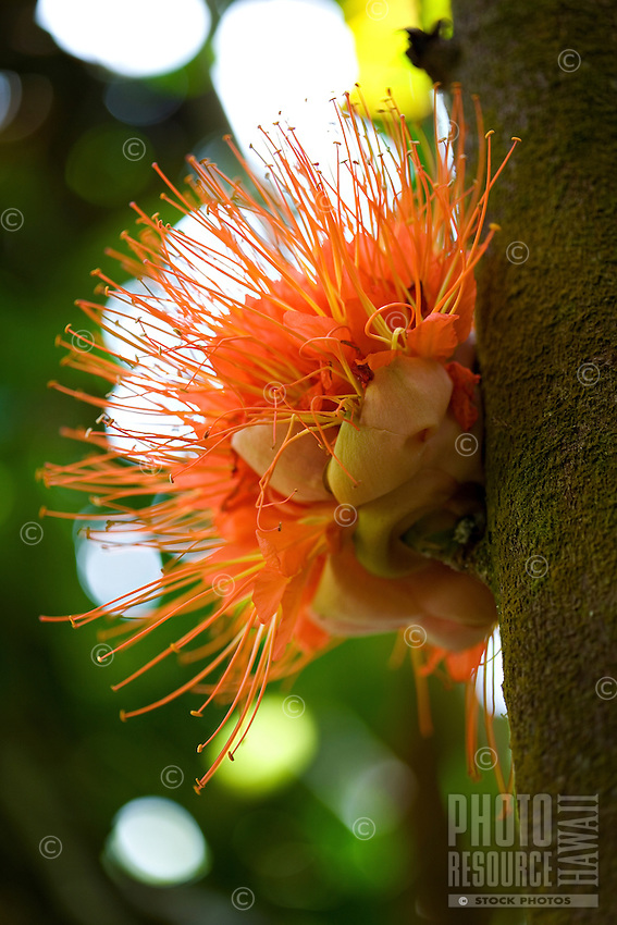 Close-up of Orange flower attached to a tree
