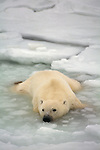A polar bear lays in water amid broken ice chunks.