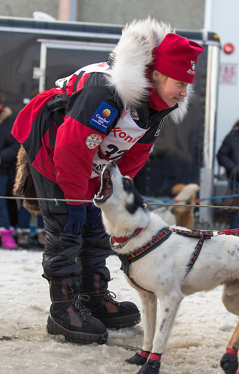 Ally Zirkle looks over her dog team at the ceremenial start of the 43rd Annual Iditarod in Anchorage, Alaska. The 1000 mile dog sled race usually restarts in Willow, Alaska, and finishes in Nome. Poor snowfall, however, forced the restart north to Fairbanks.