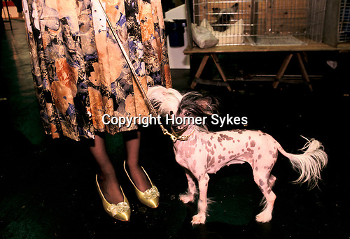 'CRUFTS', MRS SQUIRES, WITH HER CHINESE CRESTED HAIRLESS SPOTTED BITCH CALLED 'BELLE VUE LUCY LOCKET'., 1991
