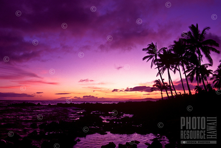 Sunset at Poipu beach with palm trees and black rocks, island of Kauai