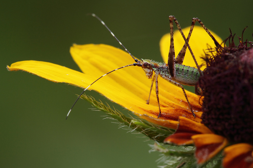 Went outside in fading light and thick clouds about an hour ago, tropical storm Bill's keeping us pretty wet..<br />