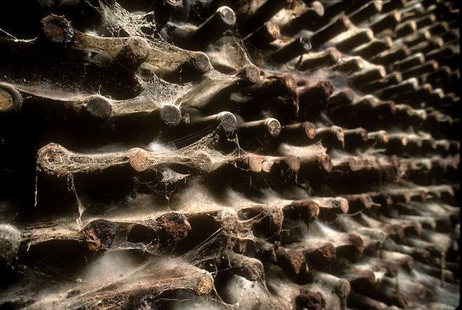 Bottles of wine found hidden in cave in St. Helena.  Bottles were possibly put there during prohibition.