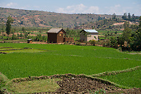 Africa, Madagascar, Ambositra. People were working in rice paddies.