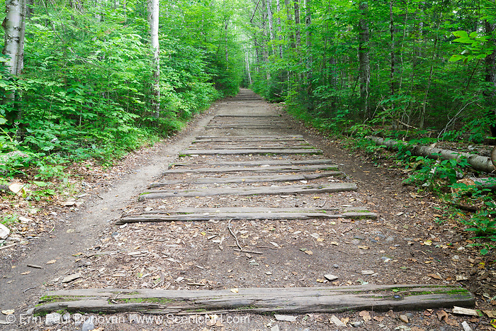 Railroad ties from the old East Branch & Lincoln Railroad along the Lincoln Woods Trail in Lincoln, New Hampshire. This trail utilizes the old railroad bed of the EB&L Railroad (1893-1948), and railroad ties are still visible along the trail.