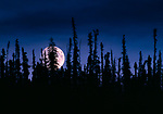 Moonrise over Yellowknife region, Boreal Forest, Northwest Territories