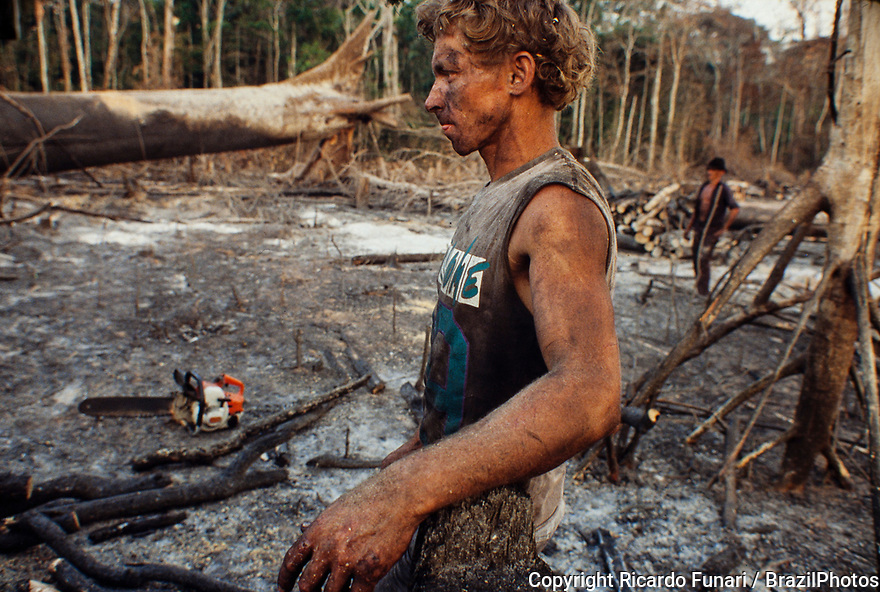 Logging, Amazon rainforest clearance, workers cut down trees using chainsaw in a slashed-and-burned patch of forest. Acre State, Brazil.