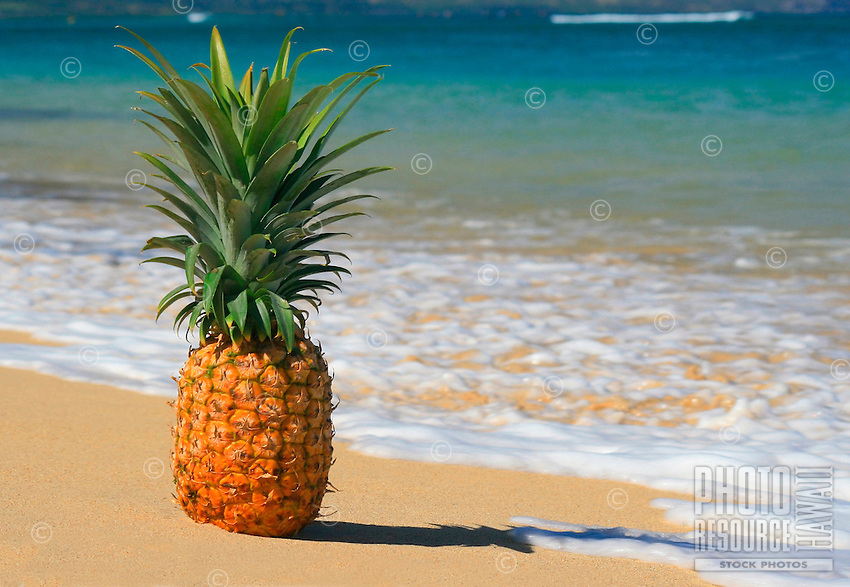 Pineapple on the beach with white foam and turquoise blue water. Maui, Hawaii.