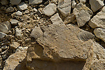 Fossils found in the rocks in the Big Bend area of Texas