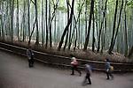 (Eng) Kyoto - 10 novembre 2009 - Bamboo forest in the Sagano area, northern Kyoto.<br /> <br /> (Fr) Kyoto - 10 novembre 2009 - Foret de bambou dans le quartier de Sagano.