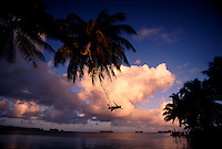"Scott Blanchard, Nature Conservancy camp cook takes time to rig a rope swiing outside the camp.  The largest purchase to date for the Nature Conservancy is the Palmyra an atoll situated about 300 miles north of the equator.  Palmyra has five times as many coral species as the Florida Keys and three times as many as Hawaii.  It is home to the world's largest invertebrate, the rare coconut crab, and a population of red-footed booby birds second only to that of the Galapagos.  It is the last marine wilderness area left in the U.S. tropics and is home to the last remaining stands of Pisonia grandis beach forest in the world.  Palmyra was a US Navy supply base in World War II, the site of a proposed nuclear waste dump, an unsuccessful coconut plantation and of various development schemes.  Palmyra is most famous for the 1974 slaying  of a married couple which became the subject of the best-selling book ""And the Sea Will Tell,"" by Vincent Bugliosi."
