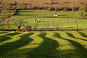 10/12/14<br /> <br /> Morning sunshine casts magical shadows over rolling the pastures of The Derbyshire Dales near Tissington in the  Peak District. The scene may look dramatically different in a few hours as a huge storm dubbed as a 'weather-bomb' is forecast to bring high winds, blizzards and flooding to much of the country.<br /> <br /> ***ANY UK EDITORIAL PRINT USE WILL ATTRACT A MINIMUM FEE OF &pound;130. THIS IS STRICTLY A MINIMUM. USUAL SPACE-RATES WILL APPLY TO IMAGES THAT WOULD NORMALLY ATTRACT A HIGHER FEE . PRICE FOR WEB USE WILL BE NEGOTIATED SEPARATELY***<br /> <br /> <br /> All Rights Reserved - F Stop Press. www.fstoppress.com. Tel: +44 (0)1335 300098