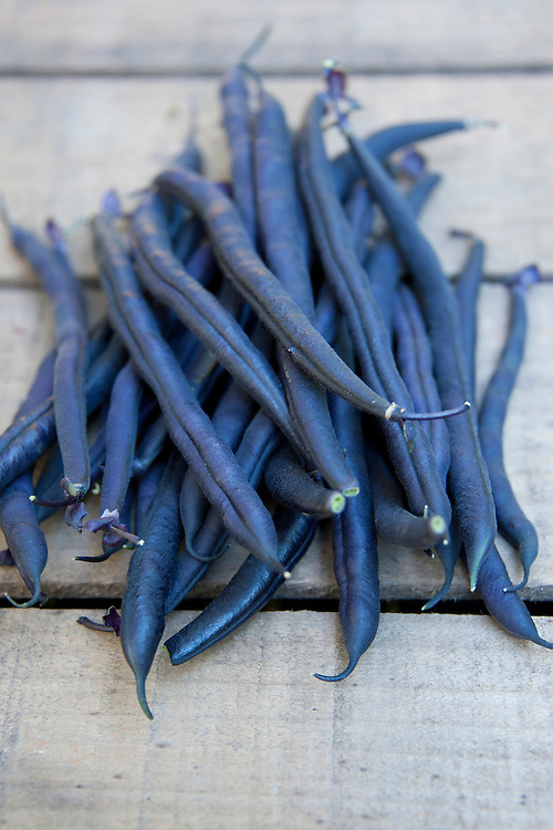 Purple dwarf French beans 'Amethyst'.