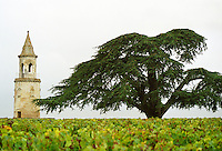 "The ""tower"" (tour) in the vineyard of Chateau Château La Tour de By and a huge big enormous cedar tree, Bégadan, Gironde, France. Médoc Medoc Cru Bourgeois Supérieur Superieur, Bordeaux Gironde Aquitaine France Europe"