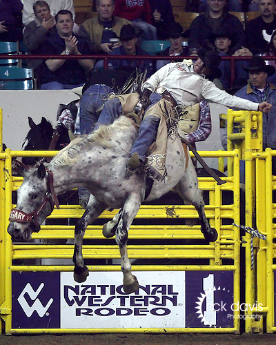 1/24/09--Photo by Rick Davis--PRCA cowboy Scott Montague of Rapid City, South Dakota scores an 83 point bareback bronc ride on the Calgary Rodeo Company bronc Nobel Prize during action at the 103rd National Western Stock Show and Rodeo in Denver, Colorado.
