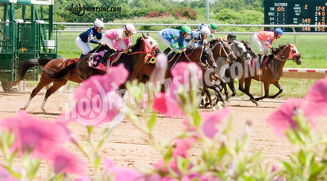 Quaterback Sneak winning at Delaware Park on 7/29/13