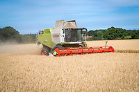 Harvesting Maris Otter winter barley - Norfolk, July