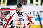 Stockholm 2013-12-28 Ishockey Hockeyallsvenskan Djurg&aring;rdens IF - Almtuna IS :  <br /> Almtuna m&aring;lvakt Erik Hanses <br /> (Foto: Kenta J&ouml;nsson) Nyckelord:  portr&auml;tt portrait