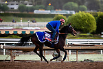 OCT 28: Breeders' Cup Filly & Mare Turf entrant Castle Lady, trained by Henri Alex Pantall, at Santa Anita Park in Arcadia, California on Oct 28, 2019. Evers/Eclipse Sportswire/Breeders' Cup