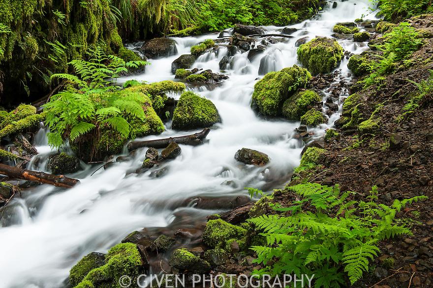 Wahkeena Creek and Lady Ferns, Columbia Gorge, Oregon