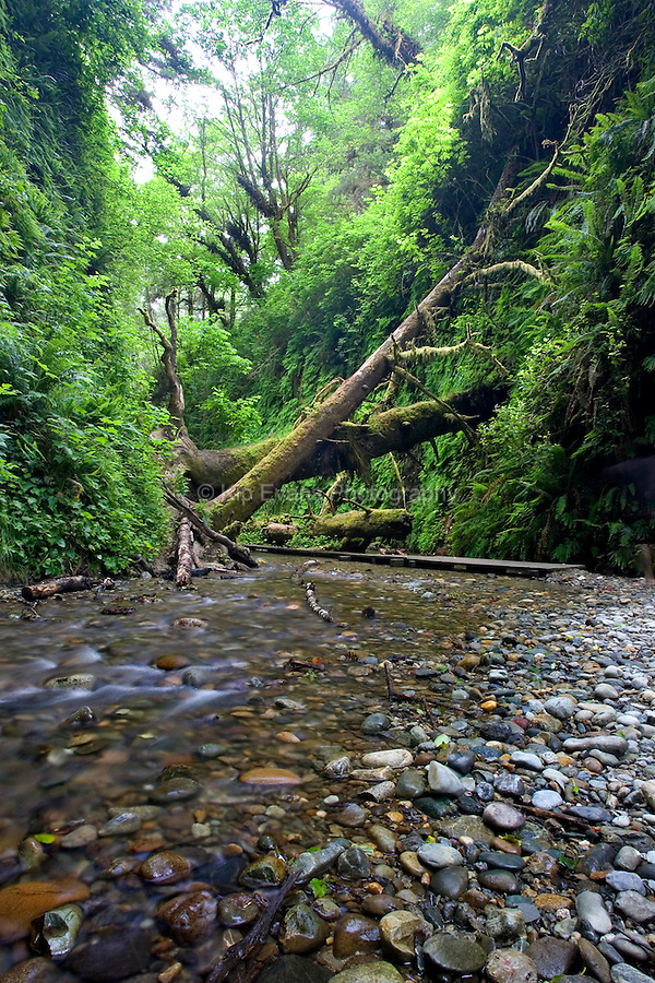 Fern Canyon in the Redwood National Park, California
