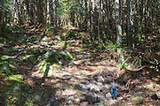 Large hole along the Mt Tecumseh Trail in the New Hampshire White Mountains. In 2012 rocks for stone structures being built along the trail were being taken from the trail corridor. Large holes, like this one, were left behind, and they pose a safety issue to passing hikers. A hiker can easily break an ankle if not paying attention. This hole has since been covered up.