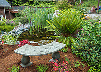 Whidbey Island, Washington: Garden bench next to pond with ferns and irises in woodland garden setting