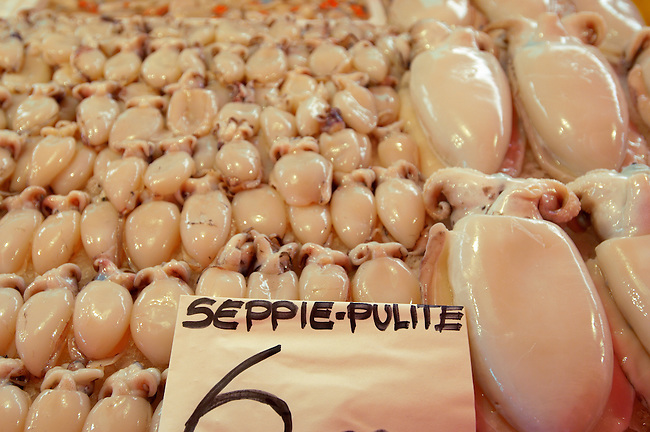 Fresh Sea Food & Fish - Squid - Chioggia - Venice Italy