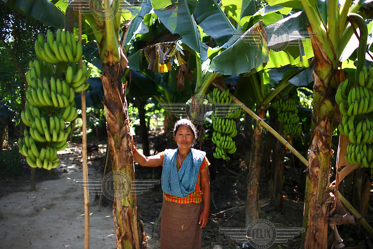 A Garo woman stands next to a banana palm in a plantation. The Garo (or Mandi, as they refer to themselves) are an ethnic minority thought to be of Tibeto-Burmese origin. Prior to British rule they were mostly anamists but missionary work led the majority to convert to Christianity. The Garo of the Madhupur forest have long been under the threat of eviction by the government and the forest that they gain much of their livelihood from is being rapidly destroyed by unregulated logging.