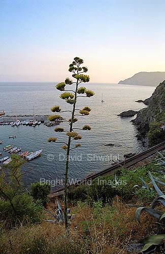 Evening along the Cinque Terre as seen from a hillside near Vernazza.