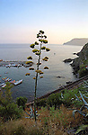 Evening along the Cinque Terre as seen from a hillside near Vernazza.