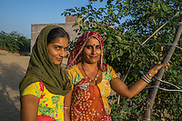 Manju Devi, 25, and her niece Anita Devi, 17, pose for a portrait in her backyard plantation of forest trees behind her house in Rajera village, Bikaner, Rajasthan, India on October 23, 2016. Non-profit organisation Technoserve works with farmer's wives in Bikaner, providing technical support and training for backyard plantations that help these communities cope with the harsh climate of the Thar desert. The forest trees provide shade to the people and their cattle, reduces water loss and sand shifting, raises the value of their properties by improvement of the landscape and raises the pride of their families, ensuring better opportunities for their children. Photograph by Suzanne Lee for Technoserve