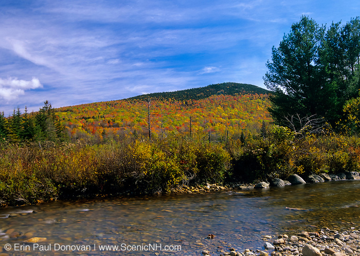 Fall colors along Zealand River in the White Mountains, New Hampshire. This area was once part of the Zealand Valley Railroad, which was a logging railroad in operation from 1884-1897.