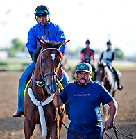 LOUISVILLE, KENTUCKY - MAY 01: Irap, owned by Reddam Racing LLC and trained by Doug O'Neill, is led off the track after exercising in preparation for the Kentucky Derby during Kentucky Derby and Oaks preparations at Churchill Downs on May 1, 2017 in Louisville, Kentucky. (Photo by Scott Serio/Eclipse Sportswire/Getty Images)