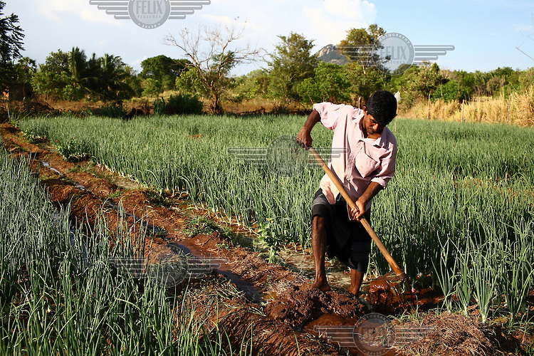 35 year old W.G. Ranjith clears an irrigation canal on his onion farm in Akkara 50. He received a loan and business training from the International Fund for Agricultural Development (IFAD).