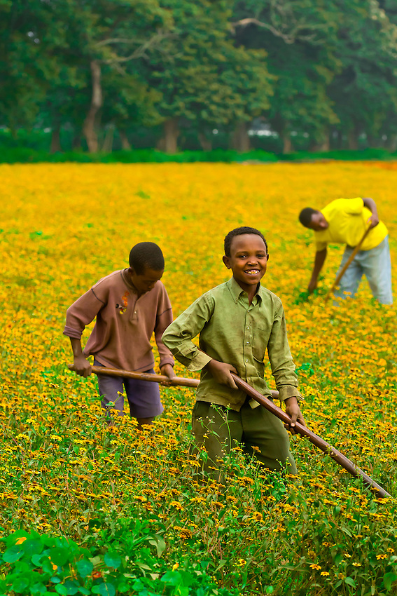 Farming flowers for export, Tanzania