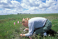 Botantist, Nancy Emery, UC Davis, doing research on role of competition and environmental stress on plants in vernal pools; CA, Sacramento Co.