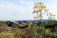 Stock photo: Cyprus landscape with hills and wild weed glancing over it.