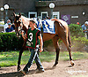Michael With Us before The Kent Stakes (gr 2) at Delaware Park on 9/7/13