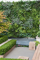 Innovative idea of planting groundcover plants sideways up a living wall of ferns, Lamium maculatum, Ajuga reptans, Tiarella, Fragaria, with boxwood shrubs trimmed in raised beds, Japanese maple Acer palmatum tree, . Foamflower