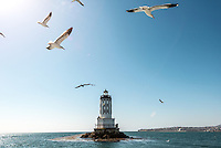 Photo of a lighthouse and seagulls near King's Harbor, Redondo Beach, Feb. 26, 2013. (Photo by Marc Campos, Occidental College Photographer)