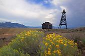 Flowering Sage Brush and old mining tower