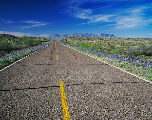 Park Road and Big Bend Bluebonnets, Big Bend National Park,Texas, USA